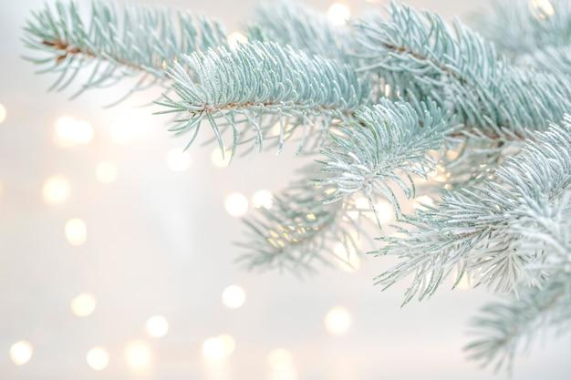 Galho de árvore de natal com luzes desfocadas