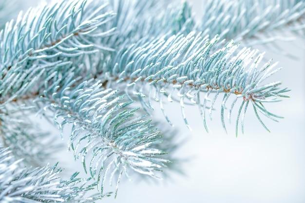 Galho de árvore de natal com neve