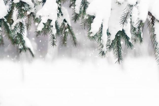 Galho de árvore do abeto coberto de neve no dia de inverno