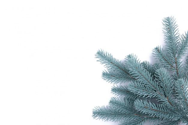 Galho de árvore do abeto em fundo branco. fundo de natal.