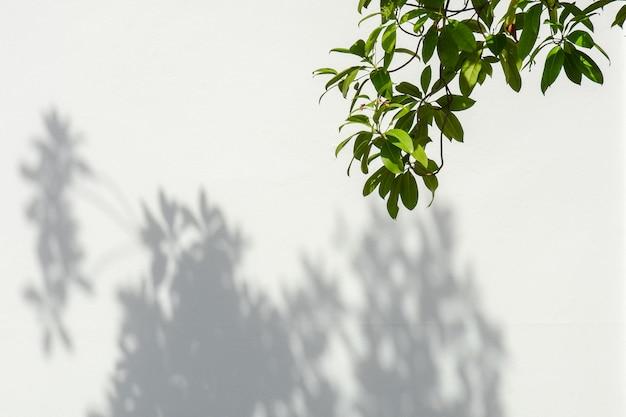 Galho de árvore e folha com sombra em um muro de concreto branco