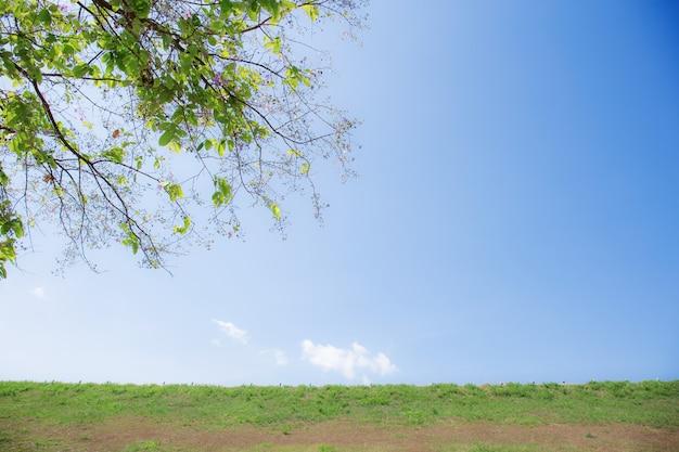 Galho de árvore e gramado com luz do sol no céu azul.