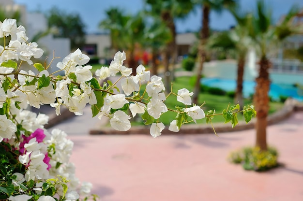 Galho de árvore em flor branca