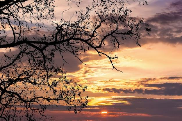 Galho de árvore escura em um fundo de céu dramático durante o pôr do sol
