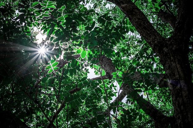 Galho de árvore na floresta no. - cenário da natureza para o verão.