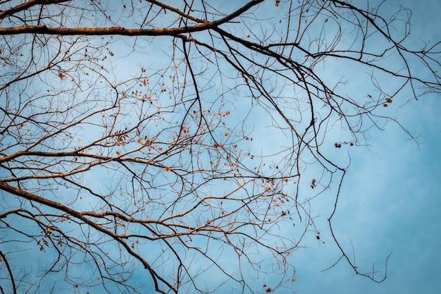 Galho de árvore no céu azul de inverno. árvore e galhos da árvore. linha de galho de árvore seco contra um fundo de céu azul de outono.