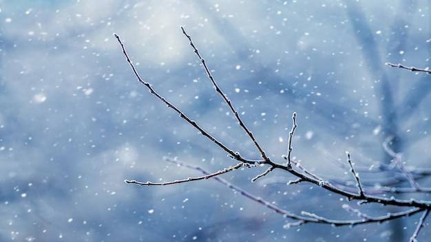 Galho de árvore nu durante uma nevasca