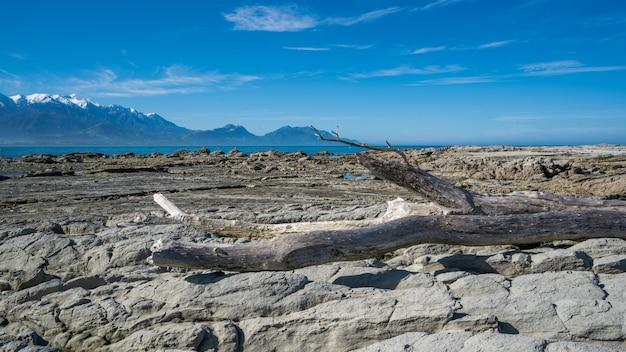 Galho de árvore seca no chão