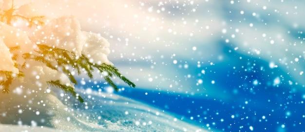 Galho de árvore spruce com agulhas verdes cobertas com neve profunda e gelo e grandes flocos de neve no fundo do espaço cópia colorida azul turva. cartão de feliz natal e feliz ano novo.
