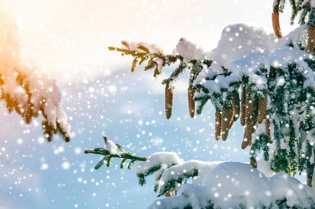 Galho de árvore spruce com agulhas verdes e cones cobertos com neve profunda e gelo e grandes flocos de neve no fundo do espaço de cópia azul turva. cartão de feliz natal e feliz ano novo.