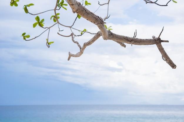 Galho de árvore verde com céu azul e o mar como pano de fundo.