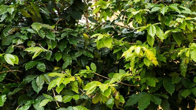 Galho de árvore verde molhado durante o tempo chuvoso na floresta tropical