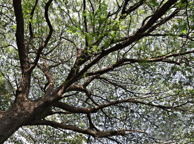 Galho de árvore