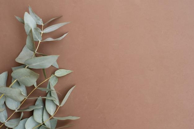 Galho de eucalipto em fundo marrom em tons de terra