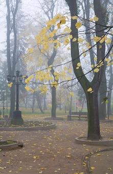 Galho de faia no fundo do parque da cidade de outono