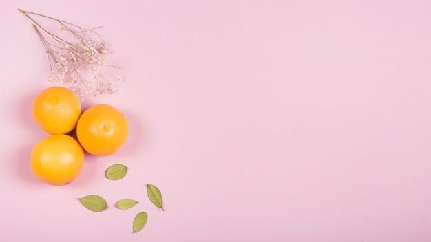 Galho de flor gypsophila; laranjas inteiras e folhas verdes em fundo rosa com espaço de cópia para escrever o texto