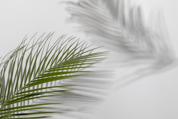 Galho de folha com sombra de perto