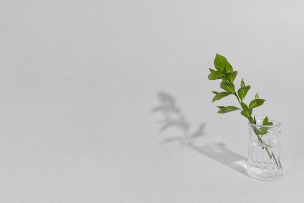 Galho de folha em vaso com sombra