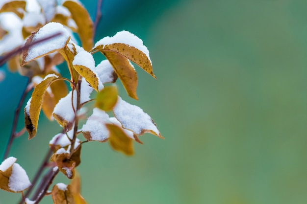 Galho de macieira com folhas marrons secas, coberto de neve, espaço livre para text_