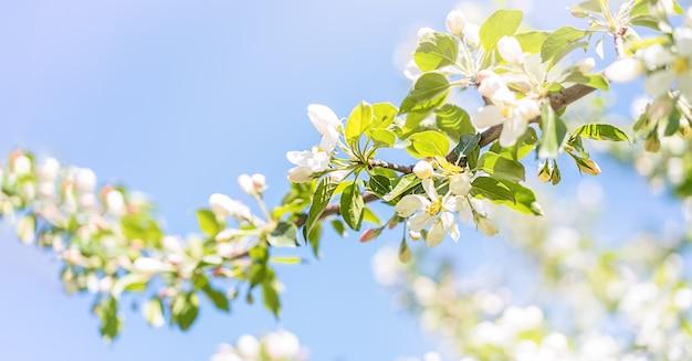 Galho de macieira contra o céu azul
