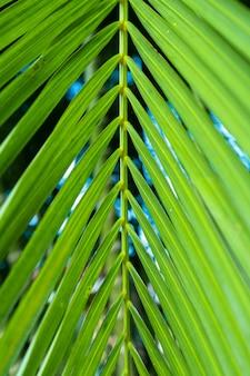 Galho de palmeira nos trópicos a céu aberto.