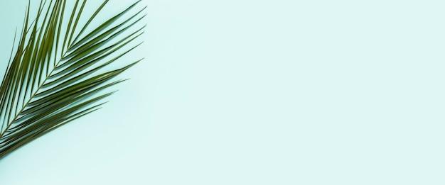 Galho de uma palmeira em um azul claro
