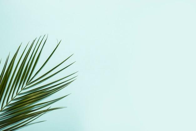 Galho de uma palmeira sobre um fundo azul claro.
