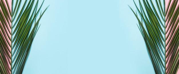 Galho de uma palmeira sobre um fundo azul e rosa claro.
