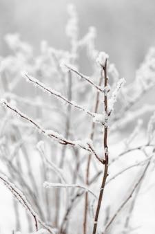 Galho de vista frontal da árvore com neve