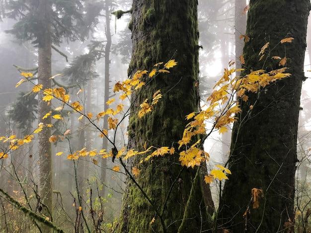Galhos com folhas amarelas rodeados por árvores