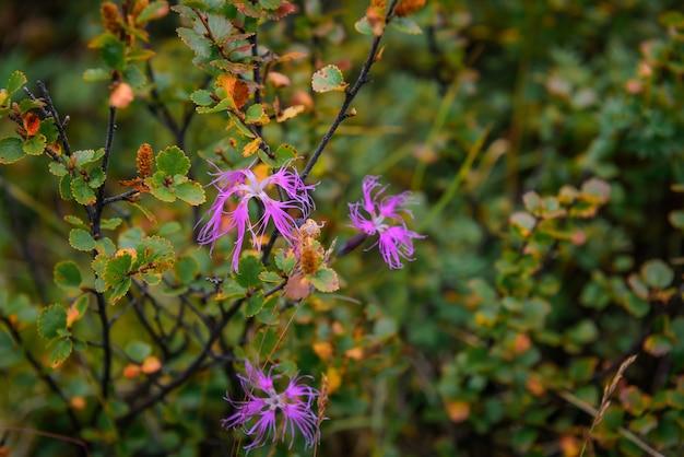 Galhos com folhas de outono