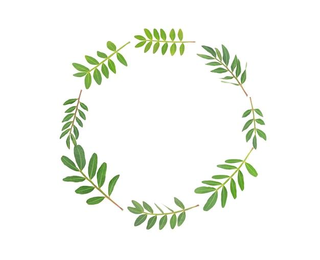 Galhos com folhas verdes isoladas em branco, círculo
