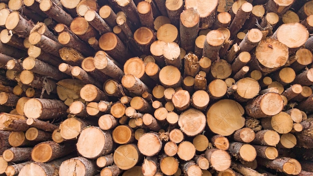 Galhos cortados na floresta