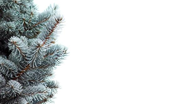 Galhos da árvore de natal cobertos de neve em branco isolado