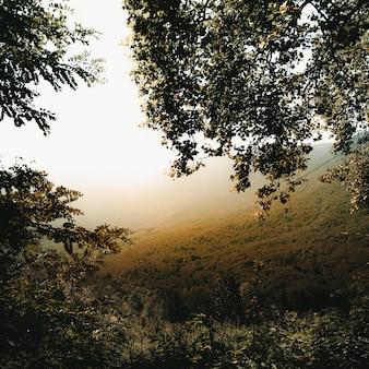 Galhos das árvores e um vale nebuloso