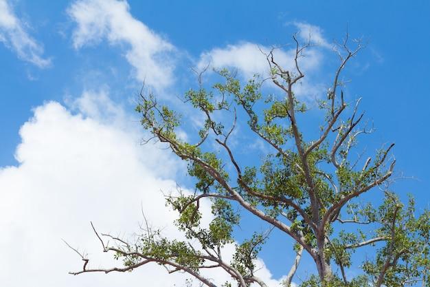 Galhos de árvore contra um nuvens fofas e fundo de céu azul