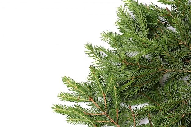 Galhos de árvore do abeto isolados no fundo branco