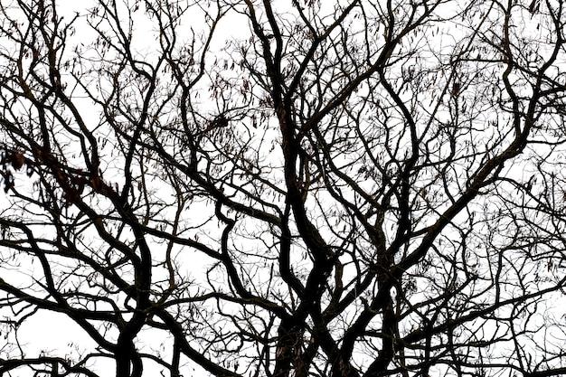 Galhos de árvore escuros em um fundo de céu claro, silhueta de árvore