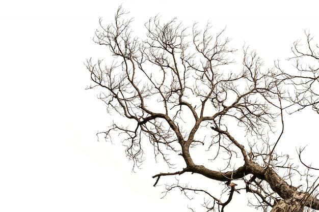 Galhos de árvore nua isolados