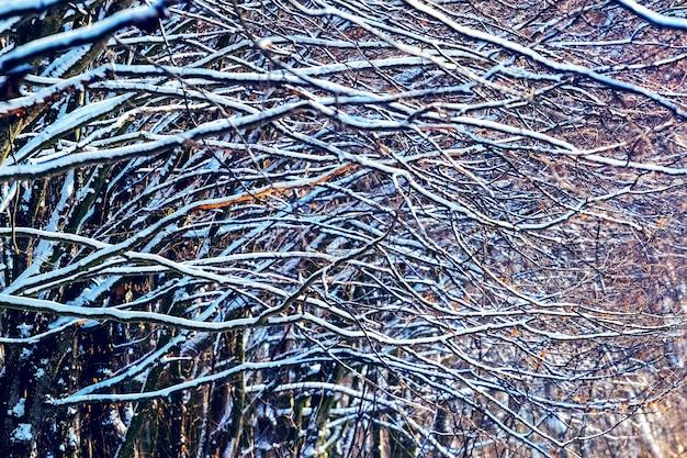 Galhos de árvores cobertas de neve na floresta