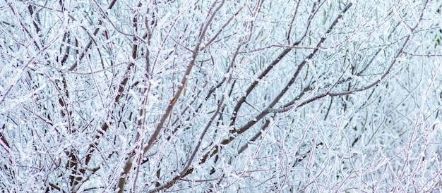 Galhos de árvores cobertos de geada formam um padrão_