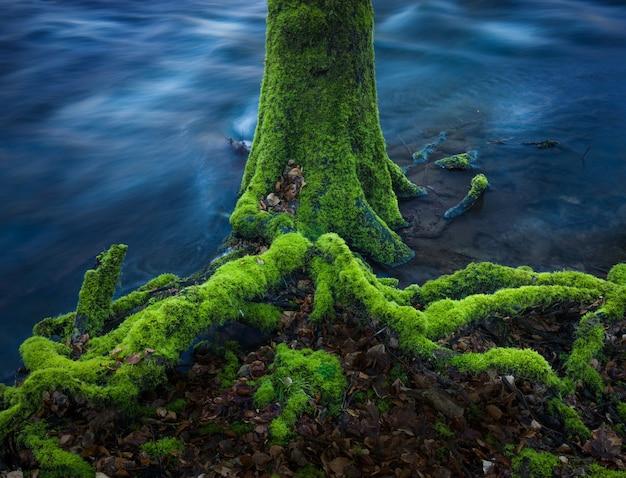 Galhos de árvores cobertos de musgo na água
