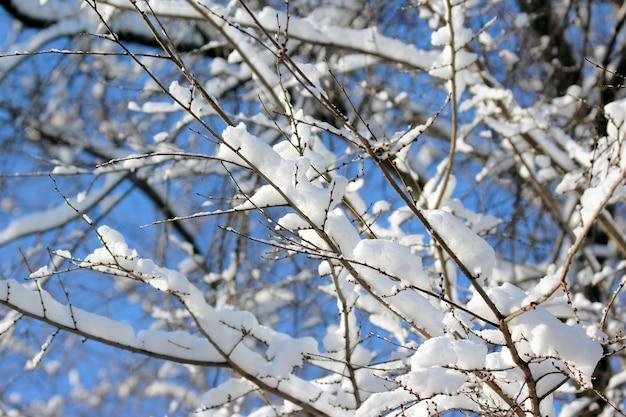Galhos de árvores cobertos de neve no inverno