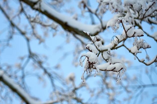 Galhos de árvores com céu azul