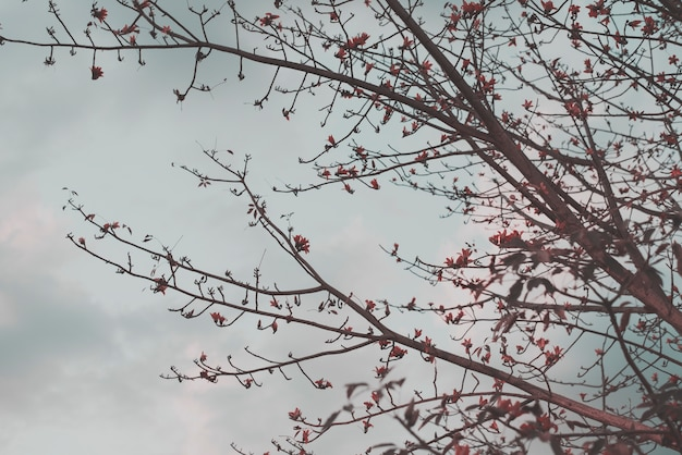 Galhos de árvores com flores na ponta