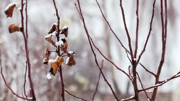 Galhos de árvores com folhas secas no inverno no jardim