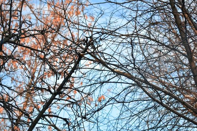 Galhos de árvores contra o céu azul