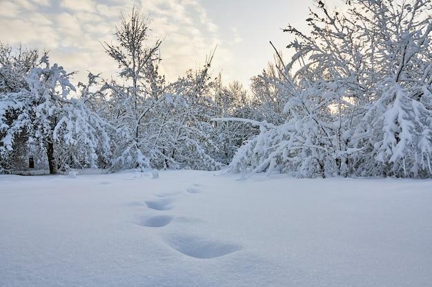 Galhos de árvores de inverno com muita neve