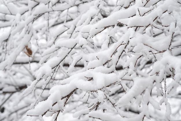 Galhos de árvores de inverno no fundo da neve