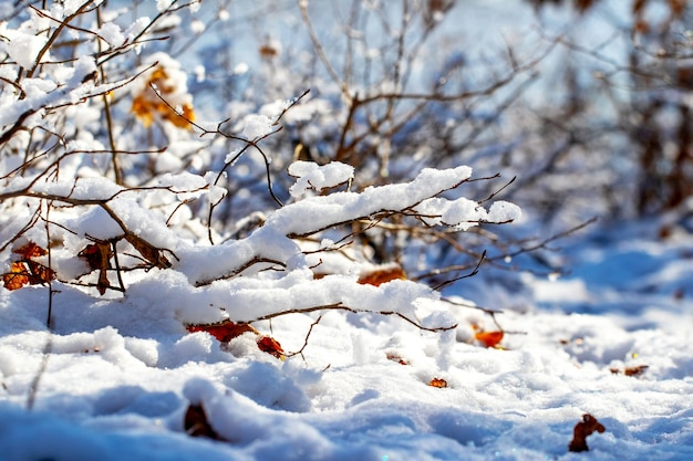 Galhos de árvores e arbustos cobertos por uma grande camada de neve em dias de sol